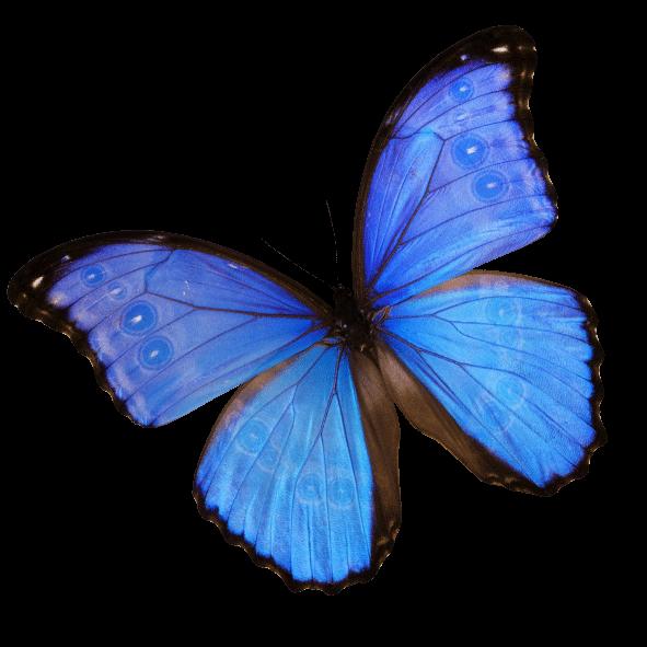 orilla-mariposa-contacto